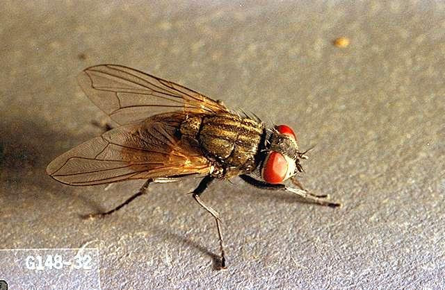 Superior Image Related To Mushroom Mushroom Fly. House Fly