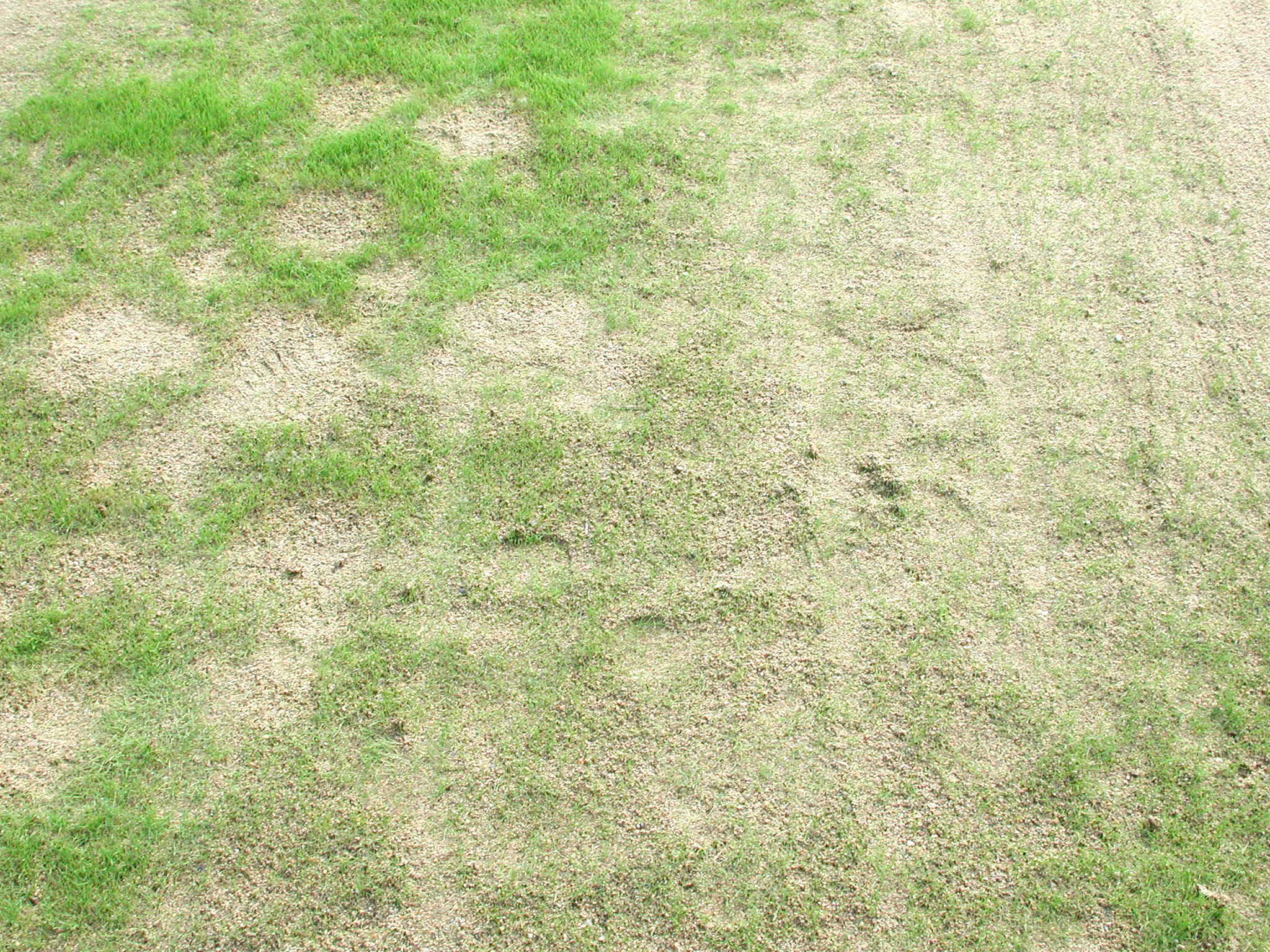 Lawn and Turf-Damping-off   Pacific Northwest Pest