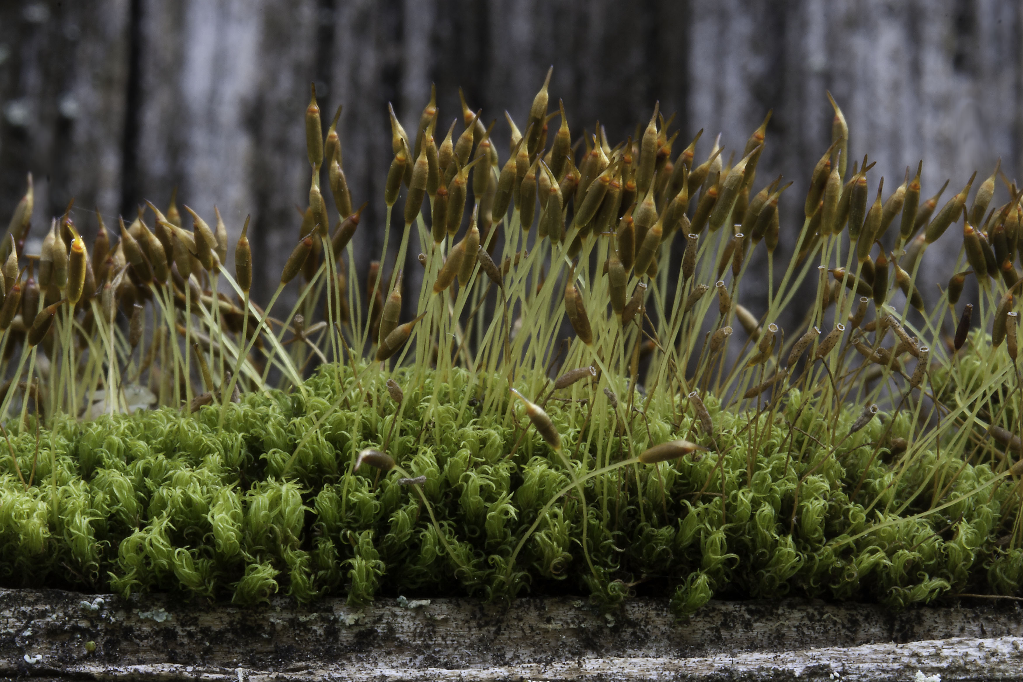 Living In The Land Of Mosses Pacific Northwest Pest Management
