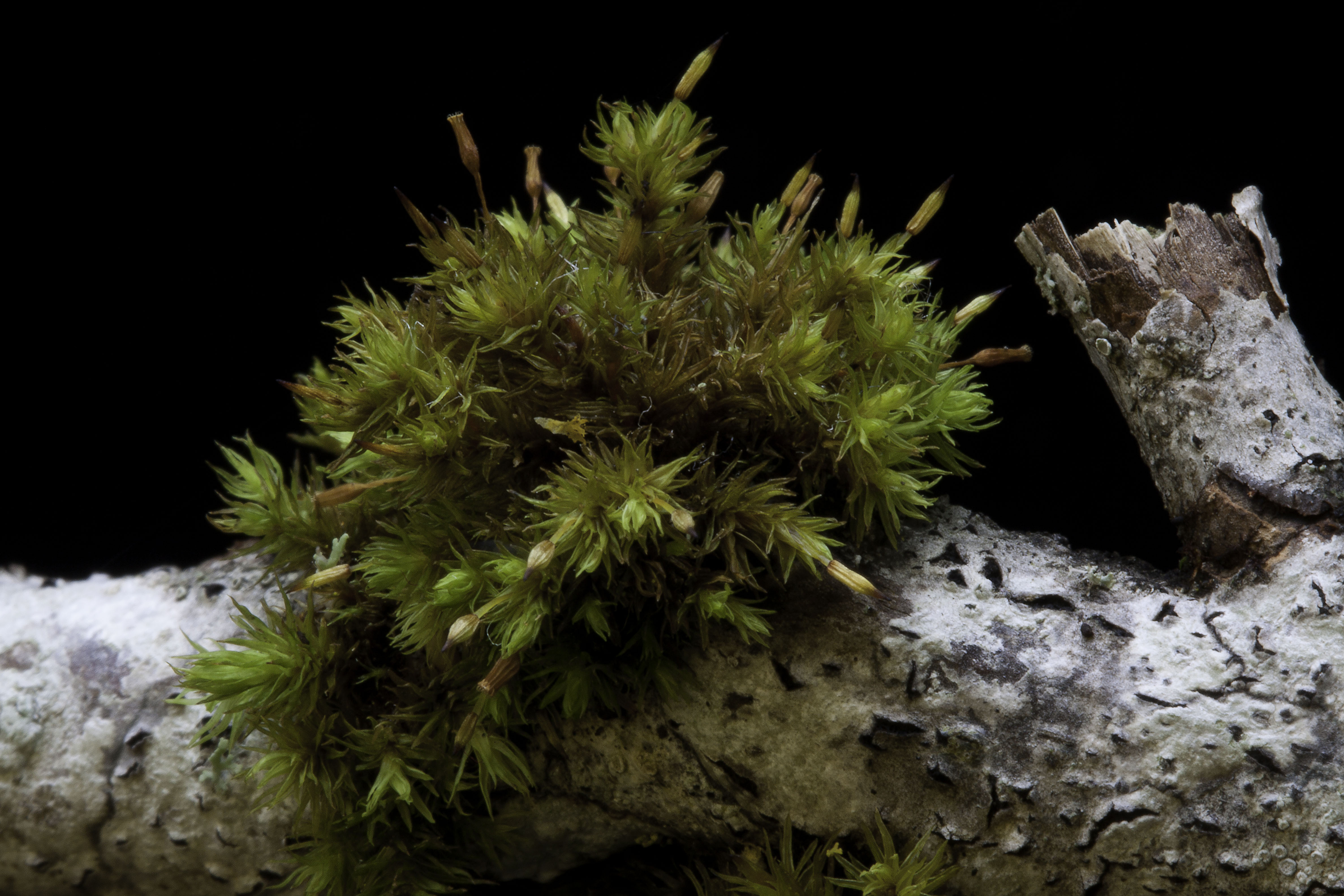 Living In The Land Of Mosses Pacific Northwest Pest