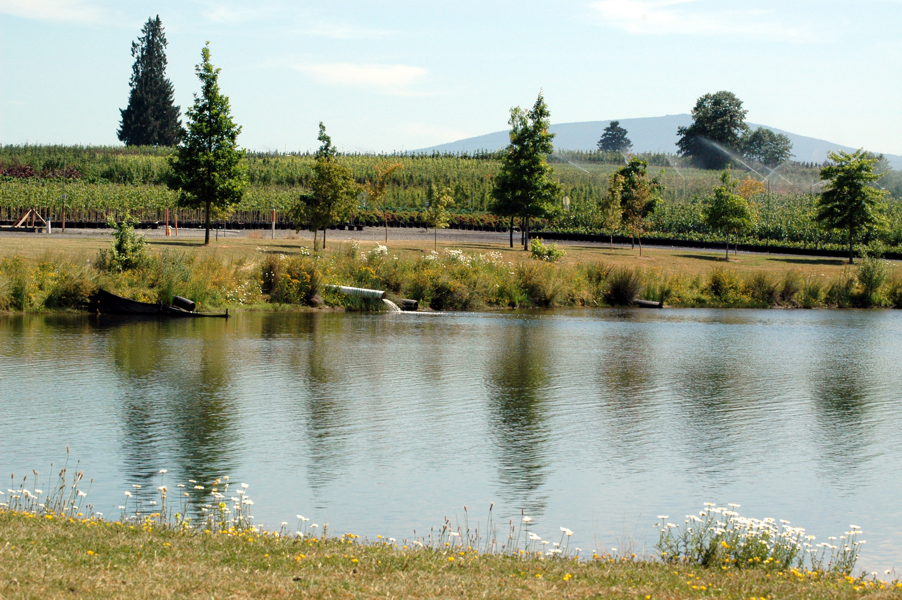 Treating irrigation water to eliminate water molds for Pond water system