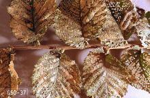 Image related to Elm (Ulmus)-Elm leaf beetle