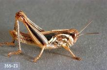 Image related to Pasture and grass hay-Grasshopper