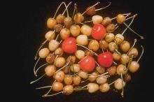 Image related to Cherry (Prunus spp.)-X-Disease