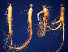 Image related to Ginseng (Panax spp.)-Phytophthora Leaf Blight and Root Rot