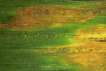 Image related to Grass for Seed-Brown Stripe and Gray Streak