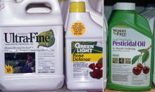 Image related to Horticultural Spray Oils