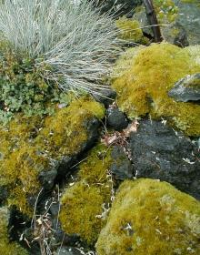 Image related to Living in the Land of Mosses