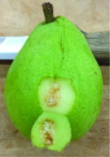 PNW Plant Disease Image
