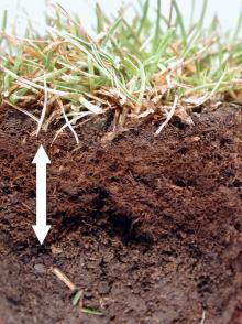 Image related to Thatch in Home Lawns