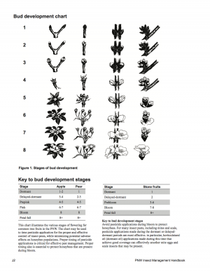 Bud Development Chart cover page